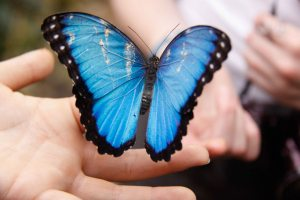 Can I be a butterfly that makes the world a little more beautiful? Courtesy of Karen Judin