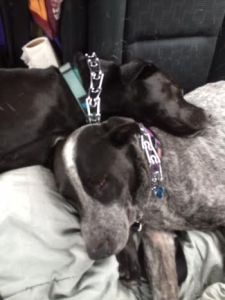 Shachar and Maddie snuggled together on the many miles from Tucson to Louisa.